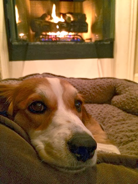 Dog by the fire