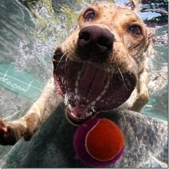 dog-underwater7