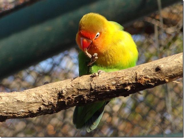 Santiago_Zoo_DSC03799
