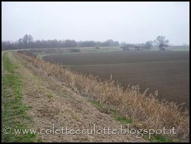 Passeggiata sull'argine dopo la piena - Padulle - 11 gennaio 2014 (18)