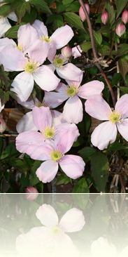 bloemen in de tuin 001