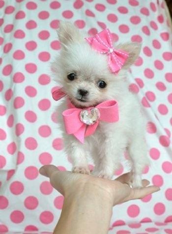cachorro rosa pink