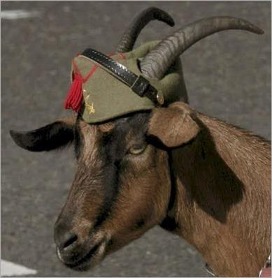 cabra-legion