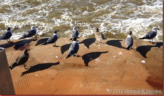 PA_VA_JulAug2012 972