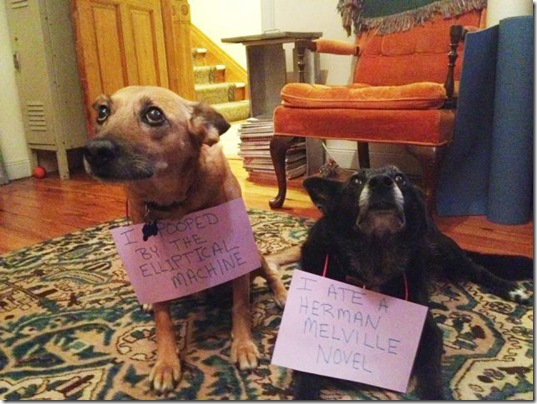 dog-shaming-bad-13