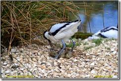 Pensthorpe Nature Reserve - Spring