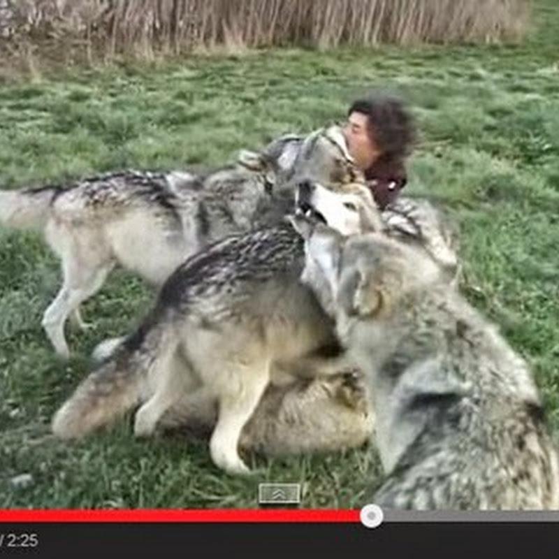 Φωτογράφος που αγαπά τους λύκους