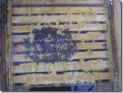 potopa včeliček 20,02,2012 005