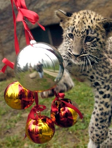 Cute-Christmas-Creatures-07