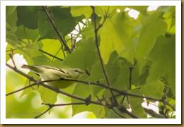 - _DSC0256-Edit May 02, 2012 NIKON D7000