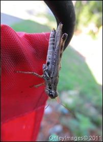 grasshopper-flag0711 (3)