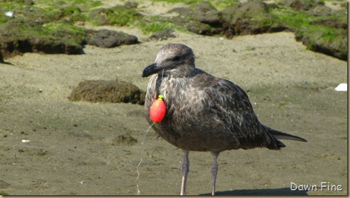 Birding Clamming_030