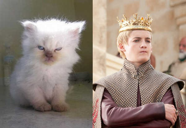 E se os personagens de Game of Thrones fossem gatos 2
