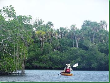 mangrove architecture