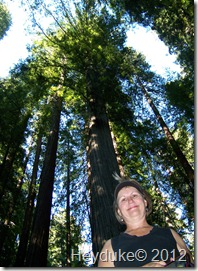 Avenue of the Giants 019