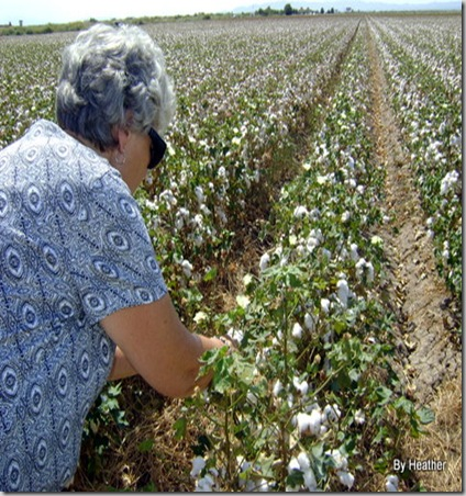 cotton 014