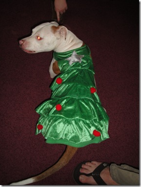 6.  Moo's Christmas Outfit (2)