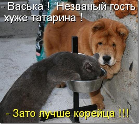kotomatritsa_ce