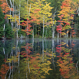 Fall Color and Reflections / Council Lake / Upper Michigan