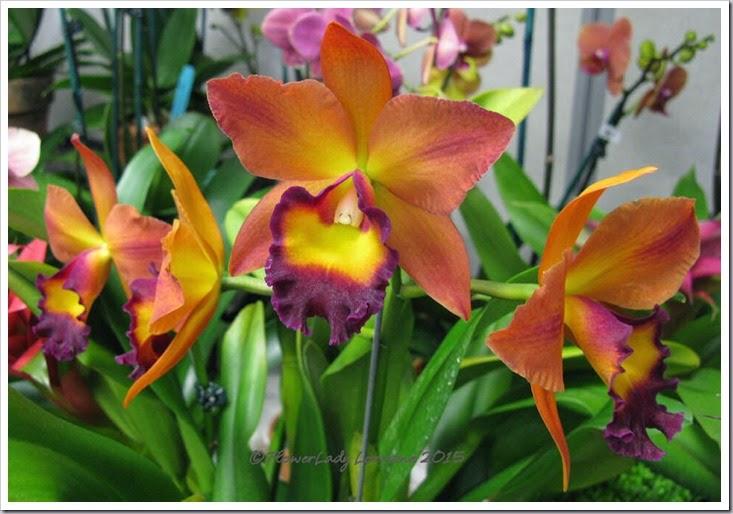 02-08-orchids10