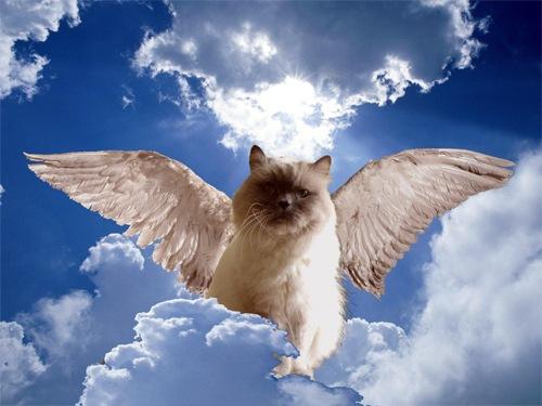 um anjo chamado wanda