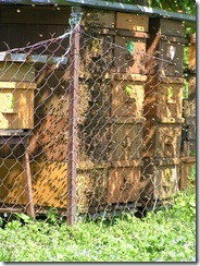 Narození panušky a jiné fota.25,05,2011 004