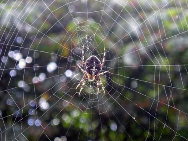 10- Teia de aranha