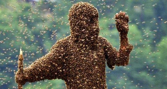 Пчела укусила за половой член