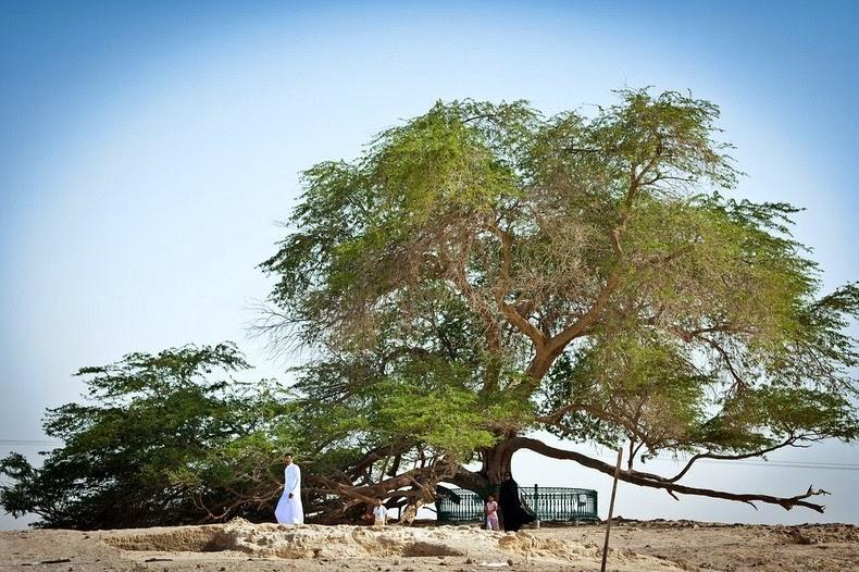 tree-of-life-4