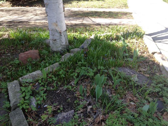 garden 4 Photo Mar 29, 12 17 46 PM.jpg