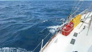 Delfine! Die Küste entlang nach Westen.