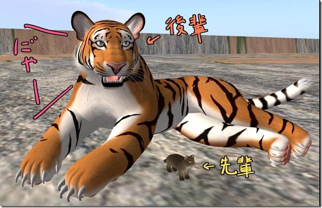 tiger4