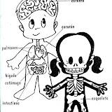 Partes del cuerpo: