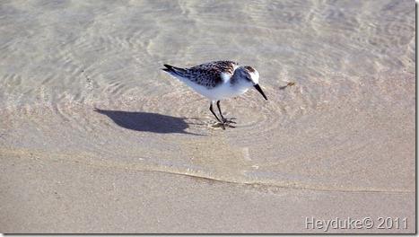 2011-10-21 Huntington Beach SP 052