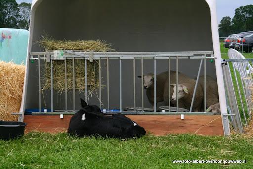 koeien kijken boer martij 18-06-2011 (2).JPG