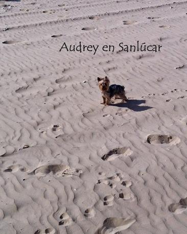 Audrey Sanlucar