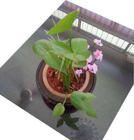 130218 - Day 45 Herbs Garden