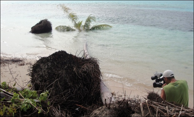 Palm trees topple due to coastal erosion on the Carteret islands, which is at risk from rising sea levels. Photo: Citt/flickr