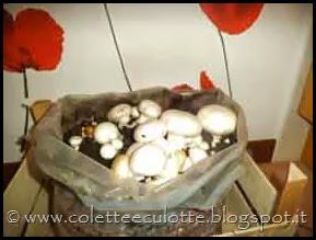 Coltivare i funghi in casa (2)