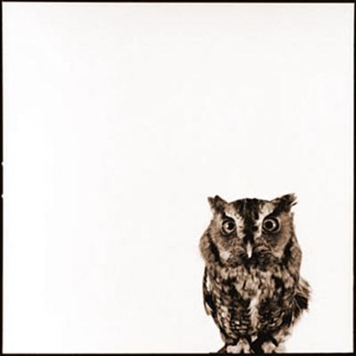 owl-5_D
