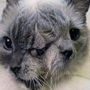 Frank e Louie, o gatinho de duas faces