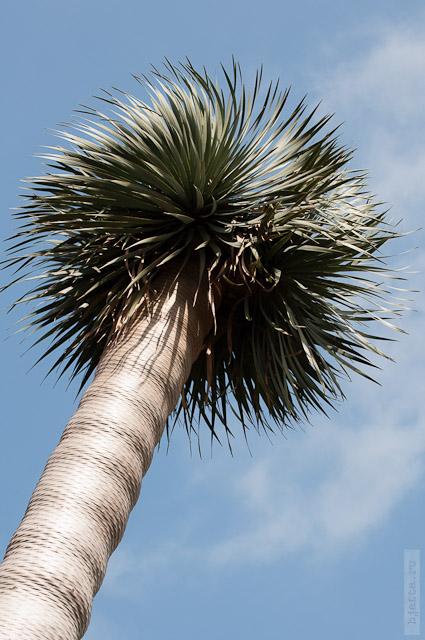 76. пальмы во всём своём разнообразии.