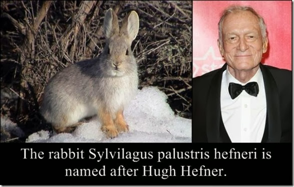 celebrity-animals-names-007