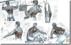 exercícios_costas