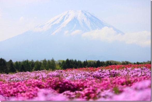 pink-park-japan-9
