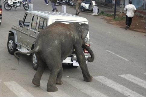India Elephant Rampage