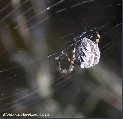 22-spider-4