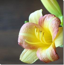 2011.8 indoor flowers-4