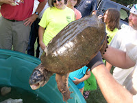 23 pound snapping turtle being held by Fisheries Biologist Chad Dolan