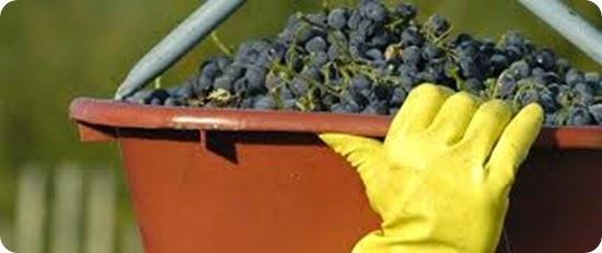 la ruta del vino en Rio Negro1